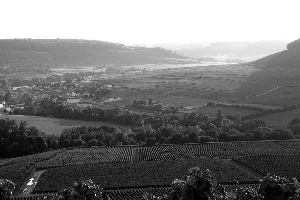 paysage-vignoble-trudon